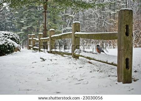 robin on split rail fence in winter - stock photo