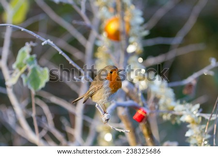 Robin on tree branch with Christmas decorations and tinsel.