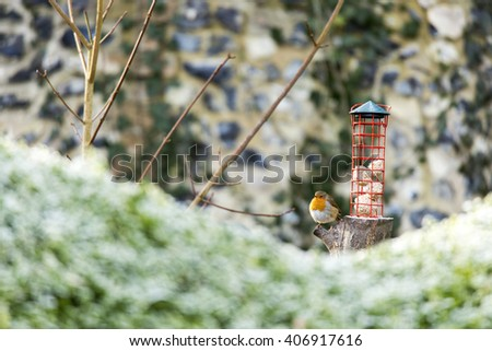 Robin sat on bird feeder, with a mossy tree branch framing the foreground in winter - stock photo