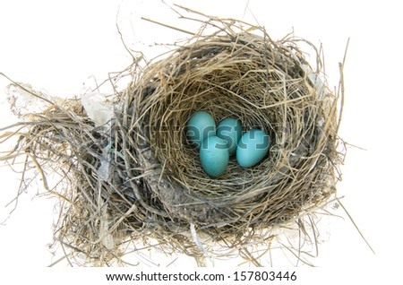 Robins nest with 4 eggs in it. Isolated on a white background - stock photo