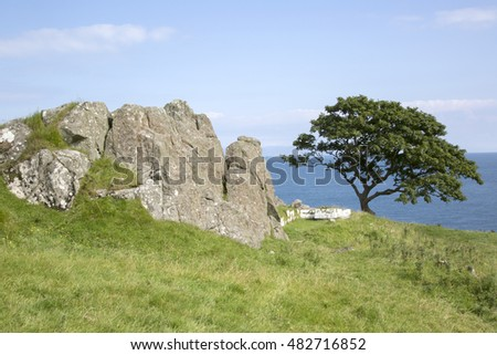 Rock and Tree, Murlough Beach; County Antrim; Northern Ireland