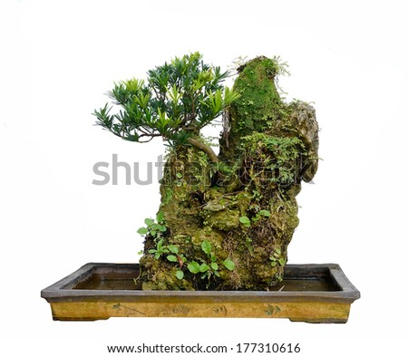 Rock bonsai isolated on white - stock photo