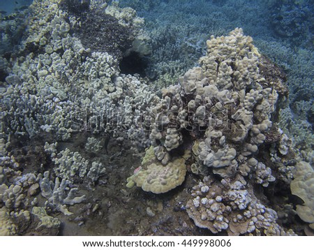 Rock built from coral in the pacific ocean - stock photo
