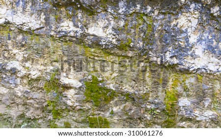 rock covered with algae texture in Abkhazia - stock photo