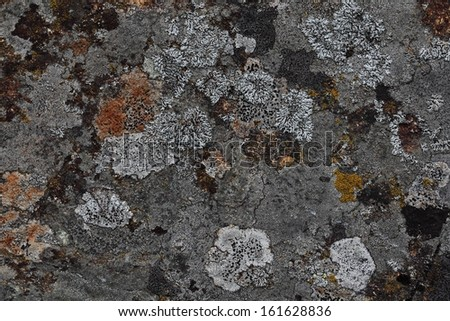Rock face found on high elevation in Alps mountains colored and textured by various fungi , lichen and mosses - stock photo
