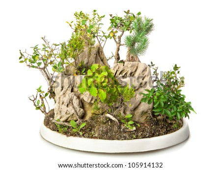 Rock forest bonsai isolated on white - stock photo