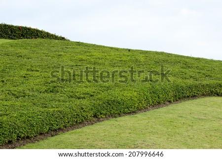 Rock garden in the park - stock photo