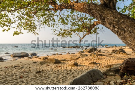 Rock shore beach with wooden swing hanging on big tree at Khao Lak in Phang nga province, Thailand - stock photo