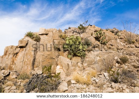 Rock with various cacti and succulents in the National Park Big Bend, Texas, USA - stock photo
