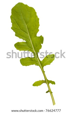 Rocket salad leaf isolated against a white background