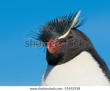 rockhopper penguin - stock photo