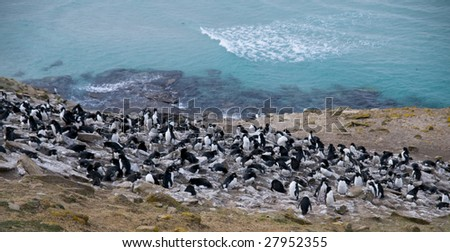 Rockhopper penguin colony - Falkland Islands - stock photo