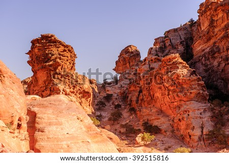 Rocks and nature in Petra, Jordan