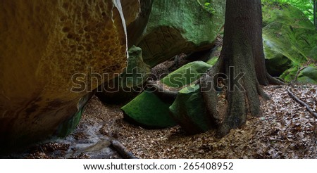 Rocks in the forest. Beautiful roots on the rocks. Spring in the forest - stock photo