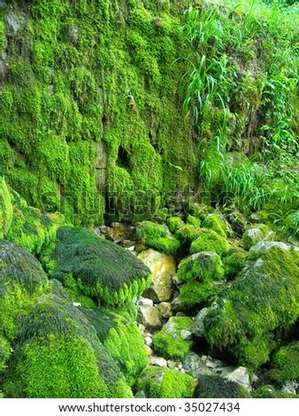 rocks overgrown with moss