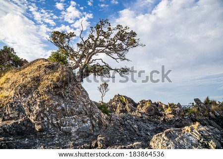 Rocky coast with a single pohutukawa tree on the Coromandel peninsula, New Zealand. - stock photo