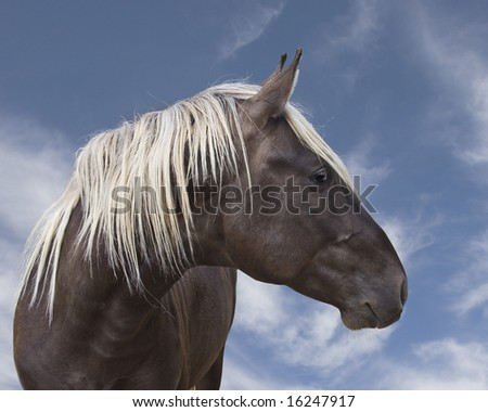Rocky Mountain horse against blue sky - stock photo