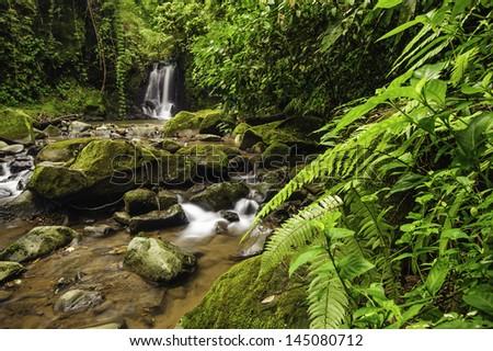 Rocky mountain stream in a Costa Rica rain forest. - stock photo