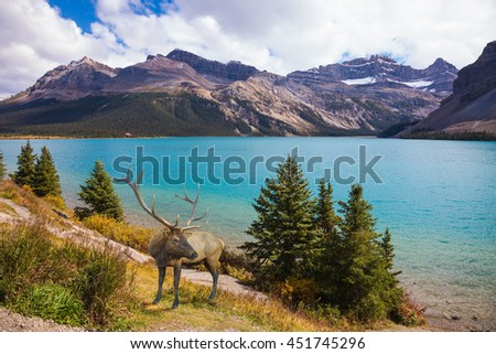 Rocky Mountains of Canada. Red deer on the bank of azure lake  - stock photo