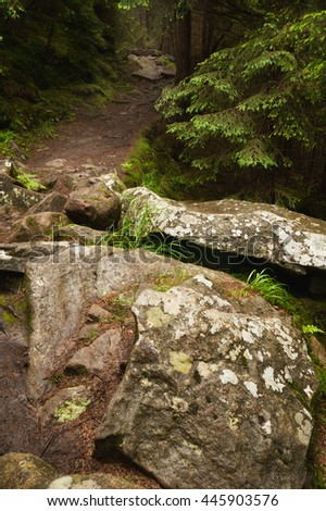 Rocky path in the green pine-tree forest. Carpathian mountains, Ukraine - stock photo