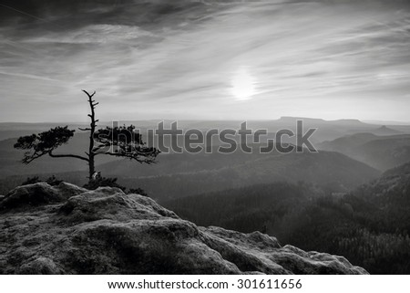 Rocky peak with natural bonsai tree in black and white color. Black and white photo
