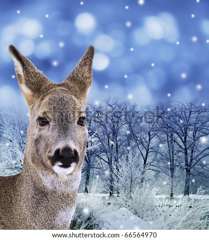 roe - doe , red deer in forest - stock photo