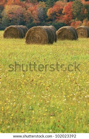 Rolled hay bale with field beyond - stock photo