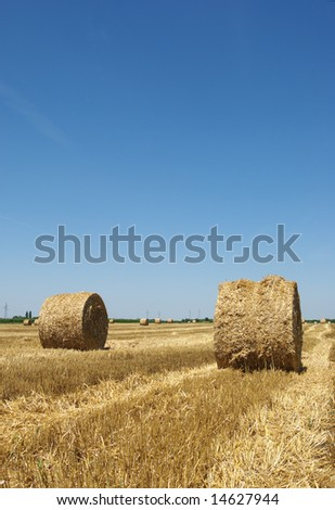 Rolled straw after harvesting in wheat field