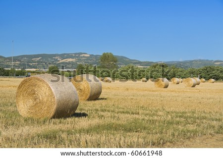 Rolling haystacks in countryside. - stock photo