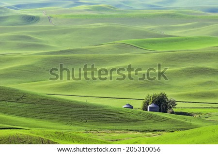 Rolling hills of The Palouse in western Washington, USA, with two silos surrounded by fields of green wheat, on a sunny evening in spring - stock photo
