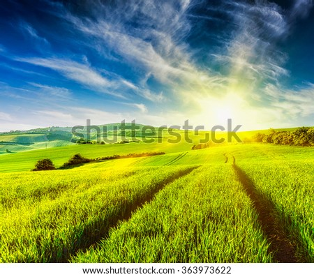 Rolling summer landscape with green grass field on sunset - stock photo