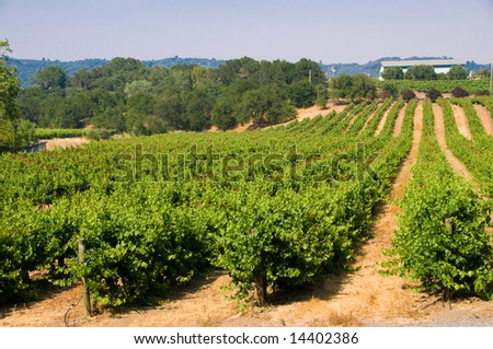 Rolling vineyards in Napa, California.