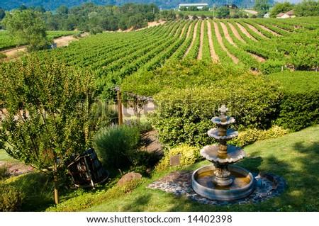 Rolling vineyards in Napa, California - stock photo