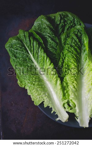 romaine lettuce leaves on a dark background - stock photo