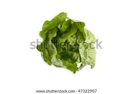 Romaine lettuce on white background - stock photo