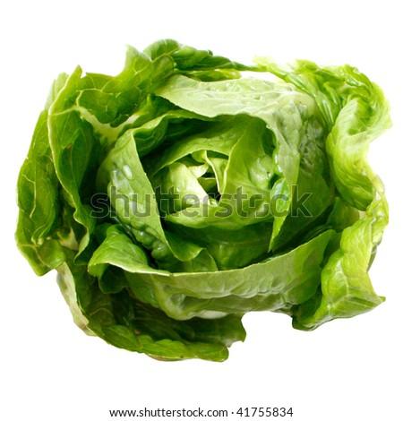 Romaine salad isolated on white - stock photo