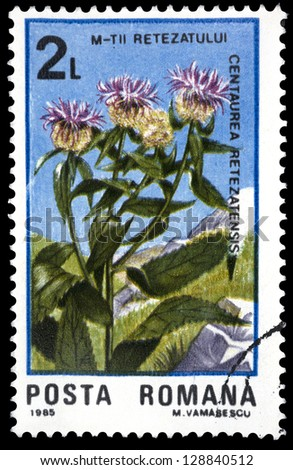 "ROMANIA - CIRCA 1985: A stamp printed in Romania shows flower Centaurea retezatensis, with the same inscription, from the series ""50 Years of Retezat National Park"", circa 1985"