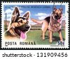 "ROMANIA - CIRCA 1990: A stamp printed in Romania shows German shepherd, with inscription and name of series ""International Dog Show, Brno, 1990"", circa 1990 - stock photo"
