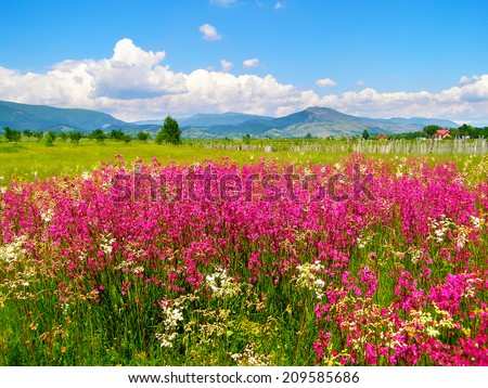 Romanian summer countryside with green fields and wildflowers - stock photo