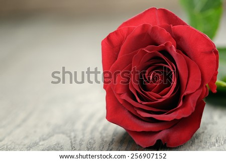 Romantic background with red rose on wood table - stock photo