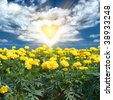 Romantic landscape with yellow flowers under blue skies and sun - stock photo