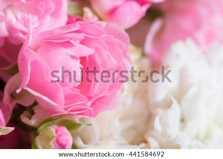 Romantic pink and white roses