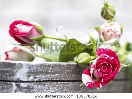 Romantic pink roses on grey wooden tray - stock photo