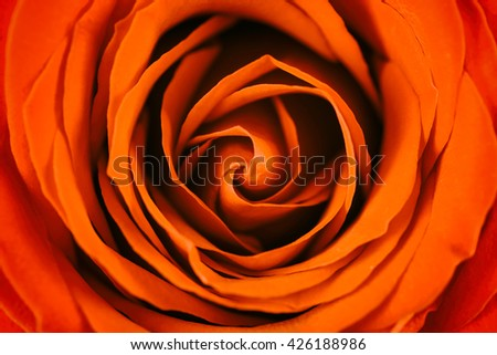 Romantic Red Rose Inside Abstract - stock photo