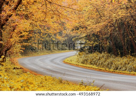 Romantic Road autumn springtime Leaves change color at Doi Ang Khang Popular travel tourist Beautiful at Chiang Mai , Thailand