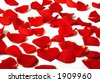 Romantic rose petals scattered around - stock photo
