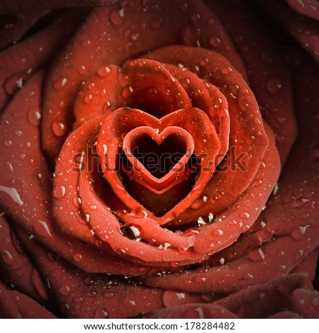 romantic rose with heart-shaped petals