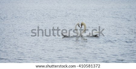 Romantic two swans in winter on lake - stock photo