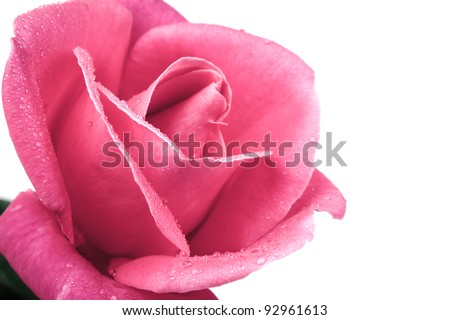 Romantic vintage rose background