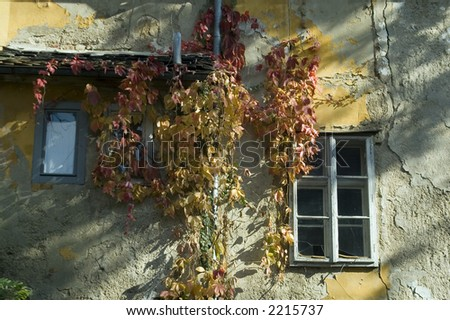 Romantic windows with ivy in fall season colors
